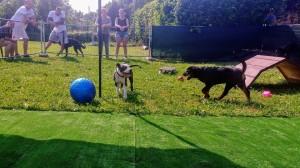 dog academy 2