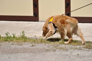 dog academy 3