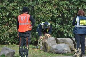 dog academy 4
