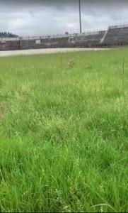 erba alta stadio